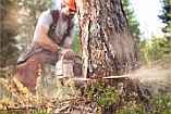 - Tree Cutting & Removal